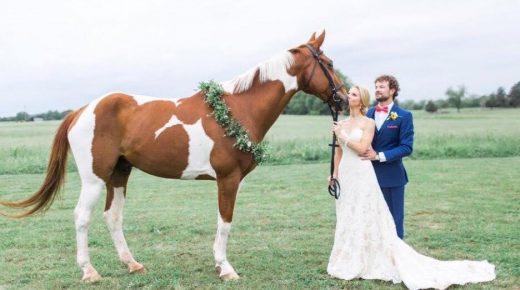 Photo Challenge: 32 Horsey Smooches