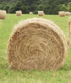 Kentucky Performance Products: Picking Hay for Sugar/Starch Sensitive Horses
