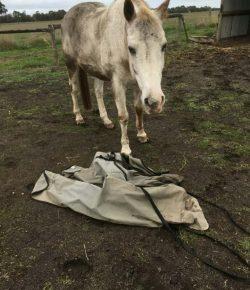 Photo Challenge: 3 Blanket That Won't Make It To Spring…