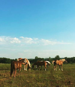 Owning a Horse vs. Owning Multiple Horses