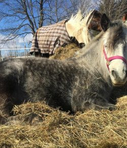 Photo Challenge: 49 Horses Living Their Best Life By Napping