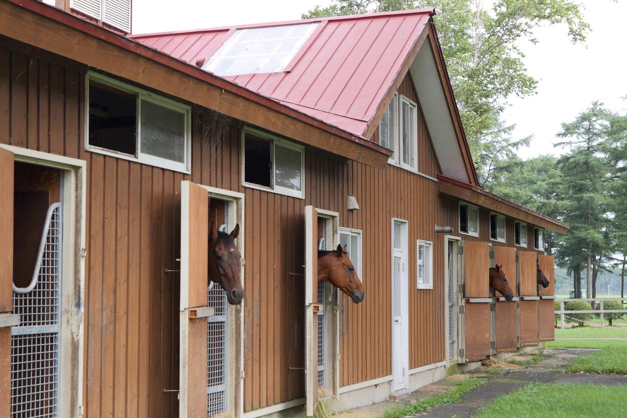 Lighthoof Designing A Horse Friendly Farm Part 2 Horse Nation