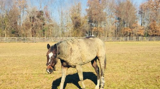 Photo Challenge: 10 Horses Who Are Serious About Mud