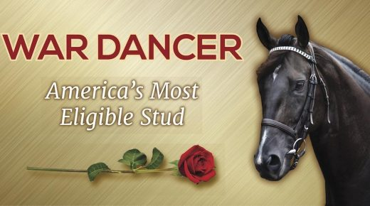 War Dancer Is 'The Bachelor' of Thoroughbreds