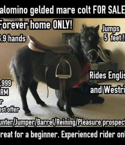This 'ISO Horse to Lease' Is Honesty at Its Most Hilarious