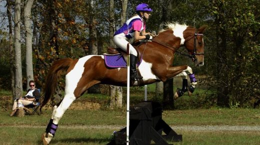 Photo Challenge: 38 Reader-Submitted Horses Rocking That Color Coordination