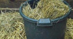 Kentucky Performance Products: Soaking Hay