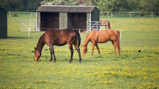 Lighthoof: Designing a Horse Friendly Farm, Part 4: The Social Lives of Horses