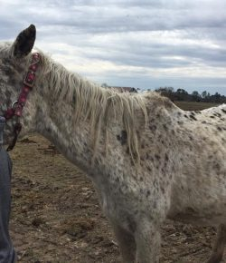 100 Horses Seized From Maryland Horse Farm, 25 Found Dead
