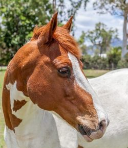 Color Blind: A Highly Unscientific Classification of Horses