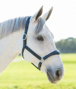 Spring Giveaway From SmartPak: Navy Harwich Halter