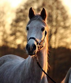 Pet Trusts: What Happens To My Horse When Something Happens To Me?
