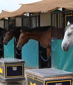 Best of JN: The Buyer's Guide to Decoding Horse Sale Ads