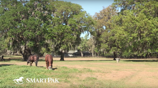 SmartPak Monday Morning Feed: Ask the Vet, April Edition