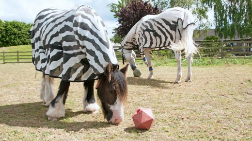 Lighthoof: Horse Friendly Farm Design, Part 6: Boredom Busters
