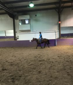 The Academic Equestrian: Finding Focus