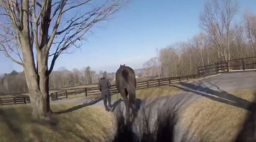 World Equestrian Brands Foal Cam: A Tour of Old Tavern Farm