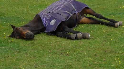 Kentucky Performance Products: Horse Sleep Patterns and Requirements