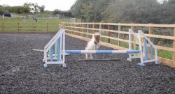 Total Saddle Fit Sunday Video: Oxer Fail
