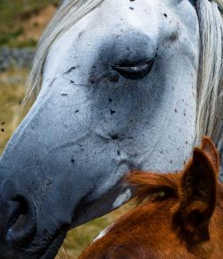 Protecting You & Your Horse From Summer Insects