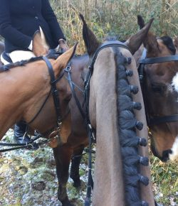 The Frugal Foxhunter Abroad: Foxhunting In England