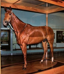Let's Discuss: Horse Taxidermy
