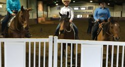 The Academic Equestrian: Slide's First Show