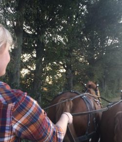 Bringing Home the Belgians: Meagan Joins the Draft Horse Family