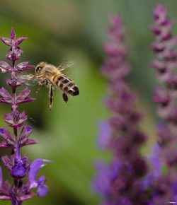 Honeybees & Horses in Perfect Harmony