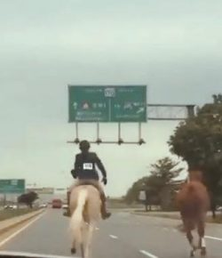 Rescue Horse & Young Rider Make Heroic Ride to Catch Loose Horse