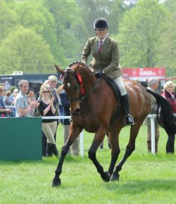 Queen Elizabeth's Homebred OTTB to Retire at Royal Windsor