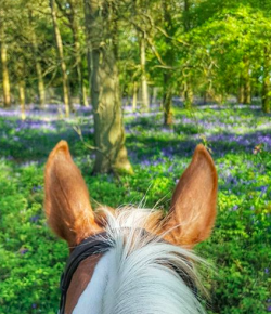 Photo Challenge: Springtime, Between the Ears