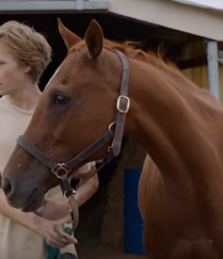 Movie Review: 'Lean on Pete'