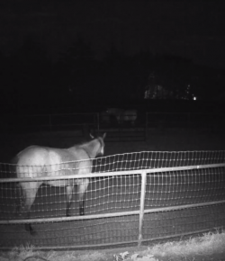 It's 2 AM: Do You Know What Your Horse Is Doing?