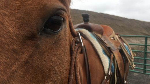 The OTTB Cow Horse Chronicles: On Contact