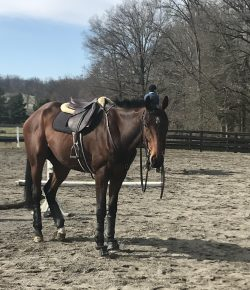 So You Want to Get An OTTB, Part I: Swipe Right or Left