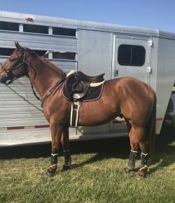 So You Want to Get an OTTB, Part II: The First Few Dates