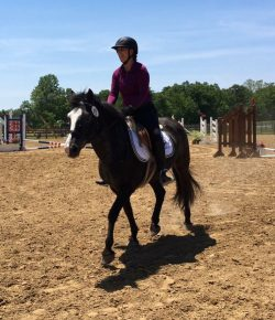 International Lesson Horse Day Essay Winner: Quinn