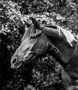 International Lesson Horse Day Essay Winner: Gryffindor