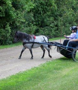International Lesson Horse Day Essay Winner: Jamie