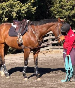 So You Want to Get an OTTB, Part III: Creating a Lasting Relationship