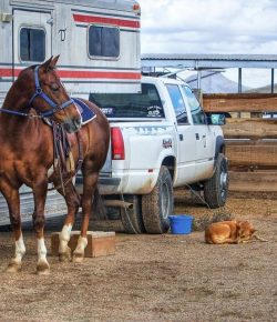 Kentucky Performance Products: Traveling Horse Checklist