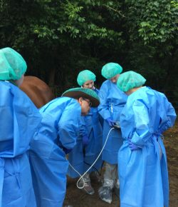 So You Want to Rescue an Auction Horse, Part V: Quarantine