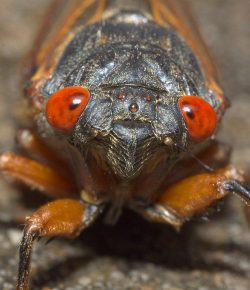 Horses & Insects: The Magical, Mystical World of Cicadas