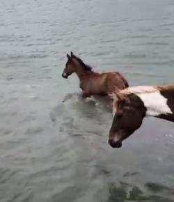 Lighthoof Tuesday Video: Practice Pony Swim
