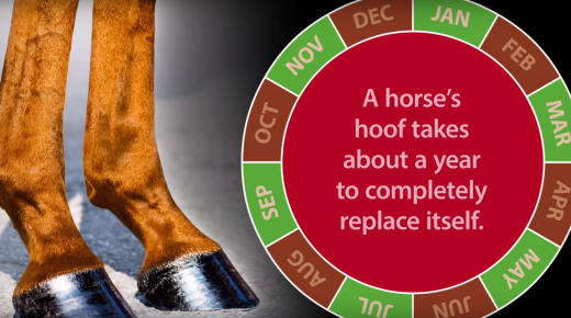 Kentucky Performance Products: Essential Ingredients for Healthy Hooves, Coat & Skin