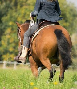 10 Ways To Make Sure Your Horse Is Absolutely Happy…