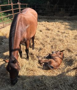 So You Want to Rescue an Auction Horse: Gil