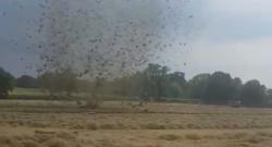 The Hay Farmer's Worst Fear