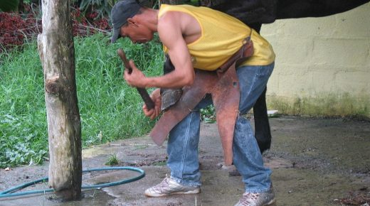 Happy National Farriers Week! Ways to Show Your Farrier Your Appreciation